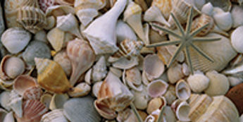 Shell Central