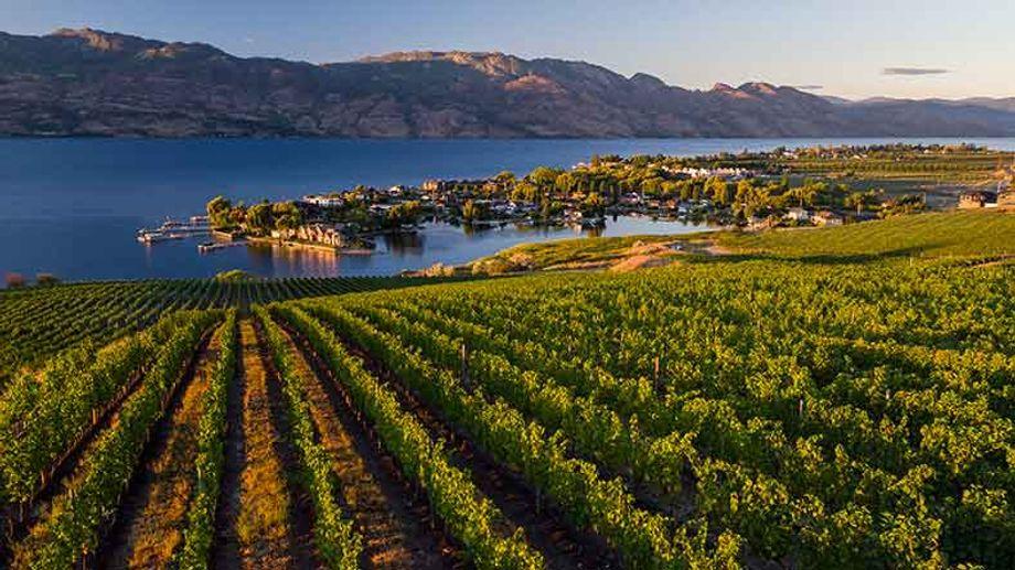 Kelowna is home to 185 licensed wineries, including Quails Gate Vineyard.