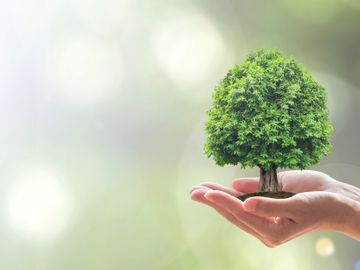 hopper-trees-carbon-offsets