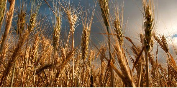 Make hay while the Google Flights sun doesn't shine