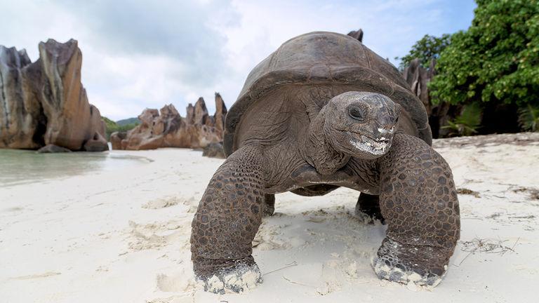 Seychelles Reopening_PHOTO2