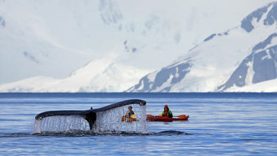 Kayaking With Whales in Antarctica