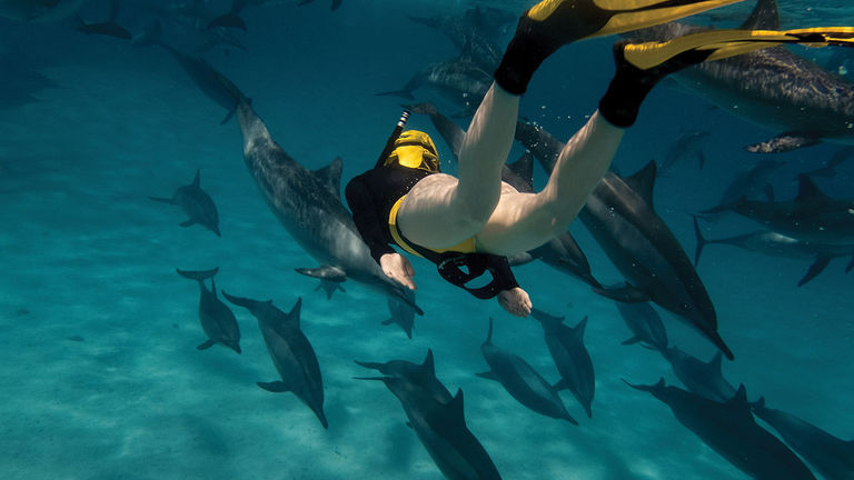 Maui is ideal for snorkeling excursions.