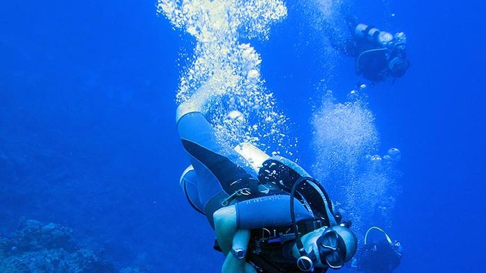 Best Caribbean Dives