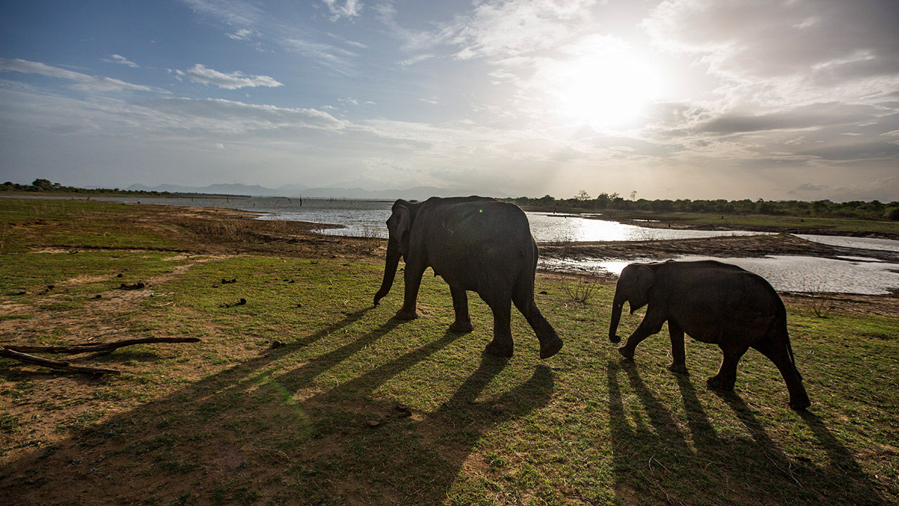 Interest in lesser-known destinations — such as Sri Lanka — will be on the rise in 2019.