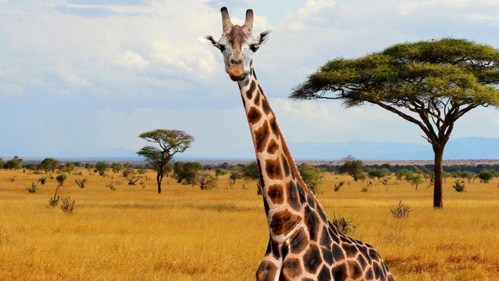 Industry Q&A: Teresa Sullivan, Safari Pros