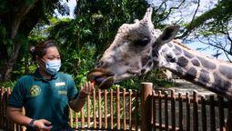 Singapore's wildlife parks renew vows with rebranding