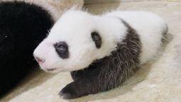 Say hi to Singapore Zoo's black and white ambassador
