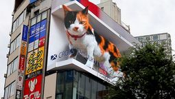 Meowww! What a purr-fect sight in Tokyo