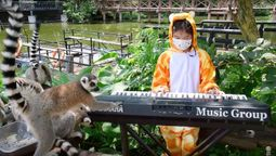 Playing to a zoo's captive audience
