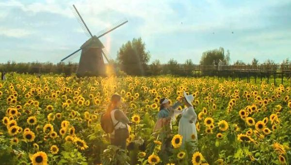 The sunflower fields are one of the most memorable backdrops in My People, My Homeland.