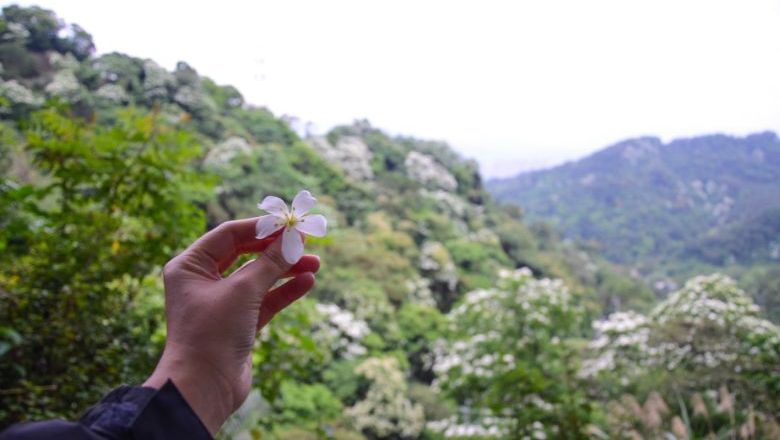 Taiwan's annual 'tung' flower season is here and visitors can still head to several flower trails to enjoy the blossoms.