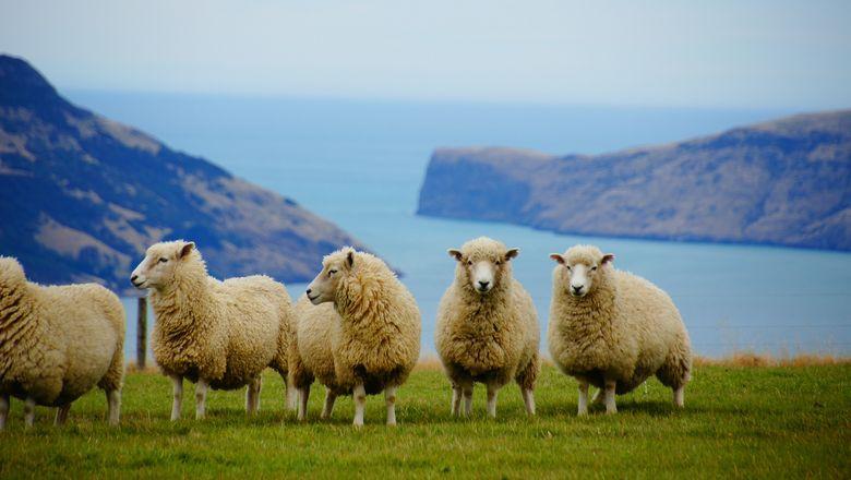 新西兰:将在奥克兰和基督城开启入境自我隔离试验
