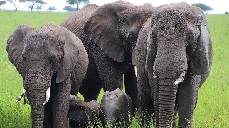 A green-season safari in Tanzania