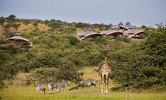 Mahali Mzuri Safari Camp