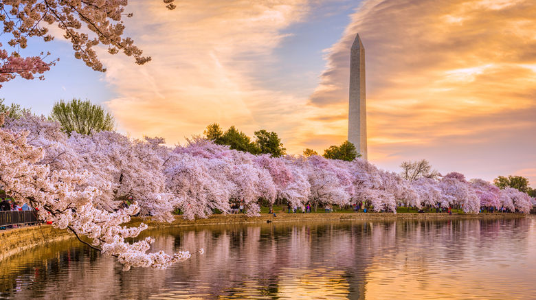 Washington, DC Scenery