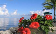 Blackfin Resort