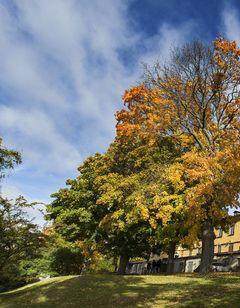 Stf Af Chapman Skeppsholmen