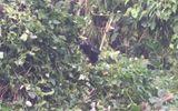 A chance encounter with a gorilla in Rwanda