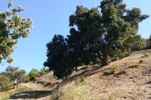Very Accessible, Easily Buildable Developed Building Site in Old Topanga Canyon Community
